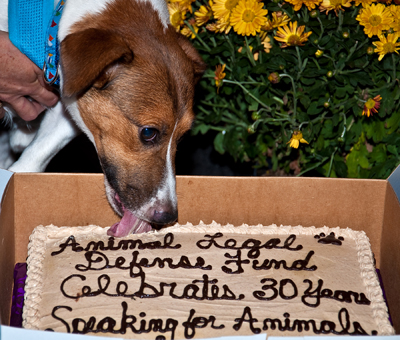 april2010spca.jpg